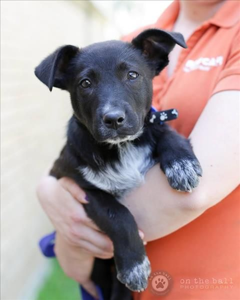 Hello Hey How S It Going My Name Is Derek 3 And I M Looking For A New Friend Or Companion That Wants To Make Me Their Furever Puppy Adoption Pets Big Dogs