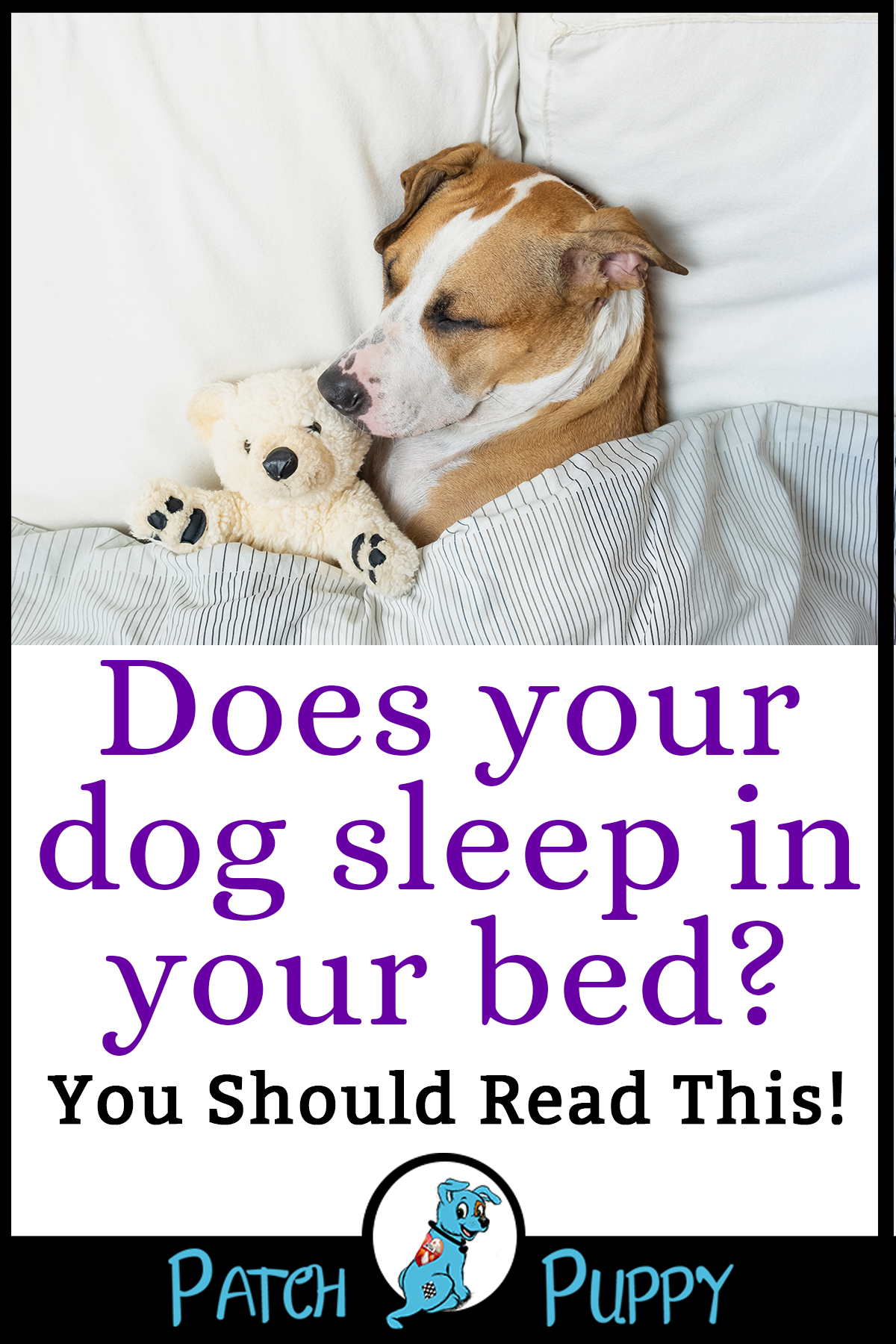Should Our Dogs Share Our Bed The Pros and Cons of Co