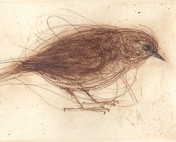 etching of a Dunnock by Bridget Farmer