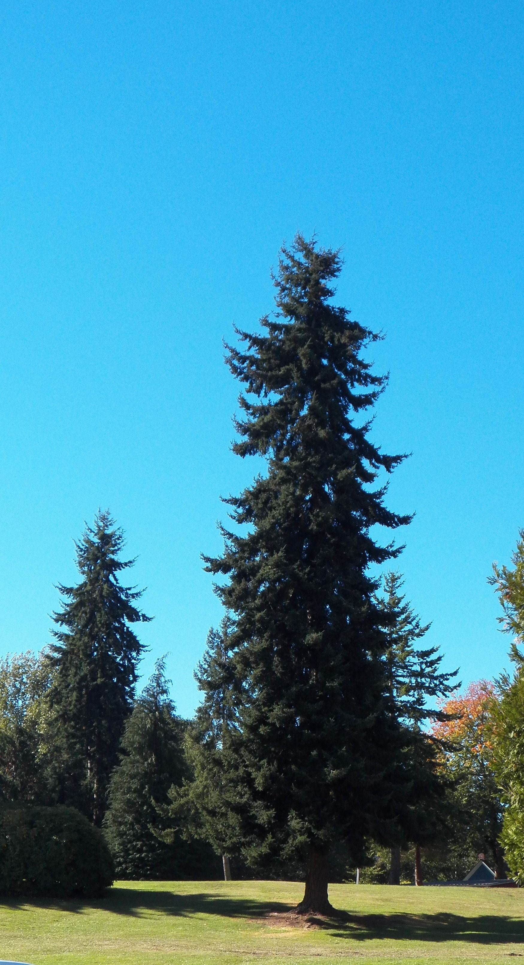 Evergreen Forest Olympic National Park Washington - Trees ... |Washington Evergreen Trees