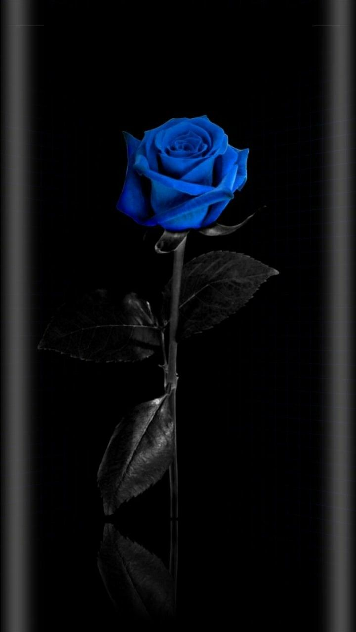 Wallpaper...By Artist Unknown... Blue roses wallpaper