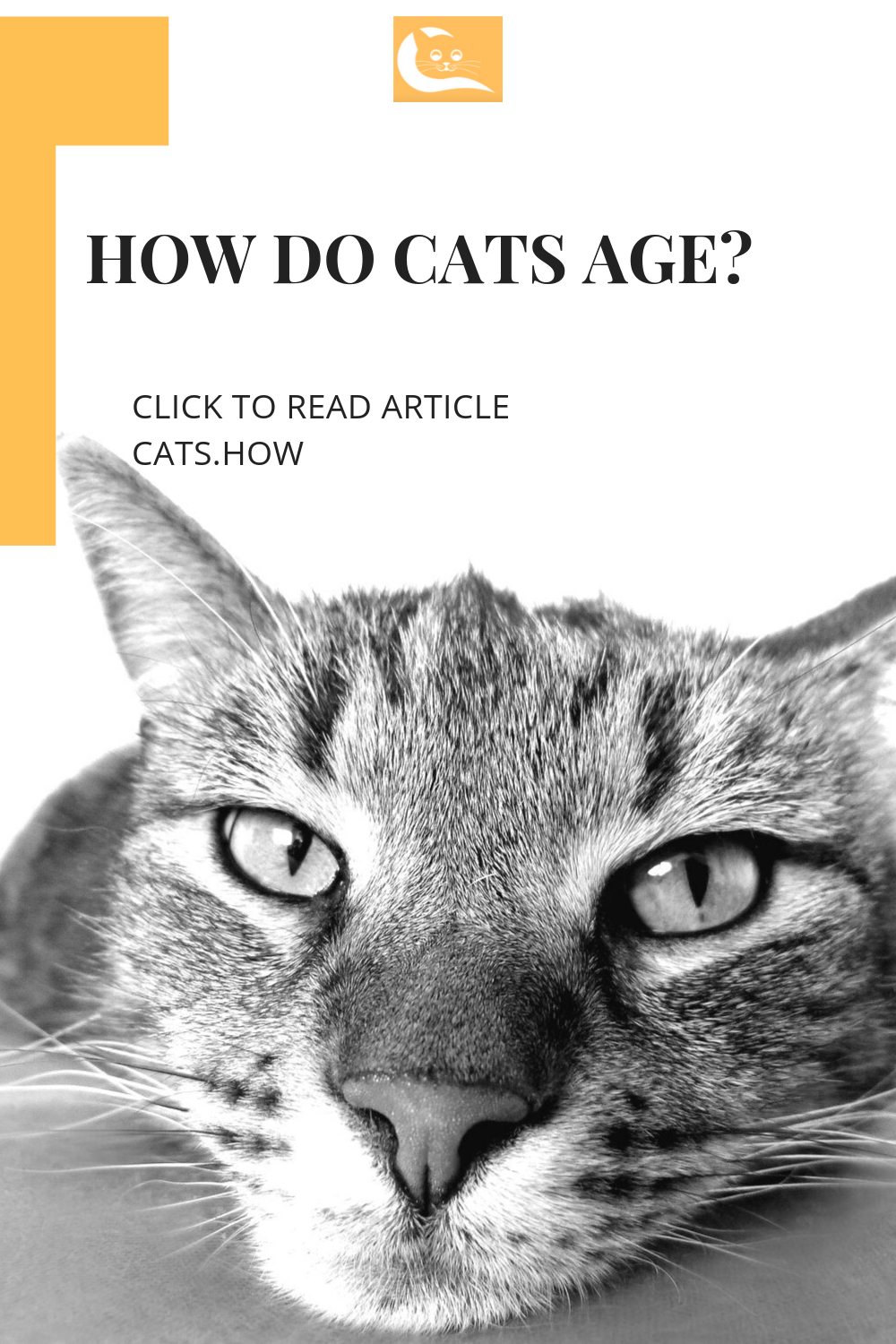 There's a popular myth going on around about how do cats