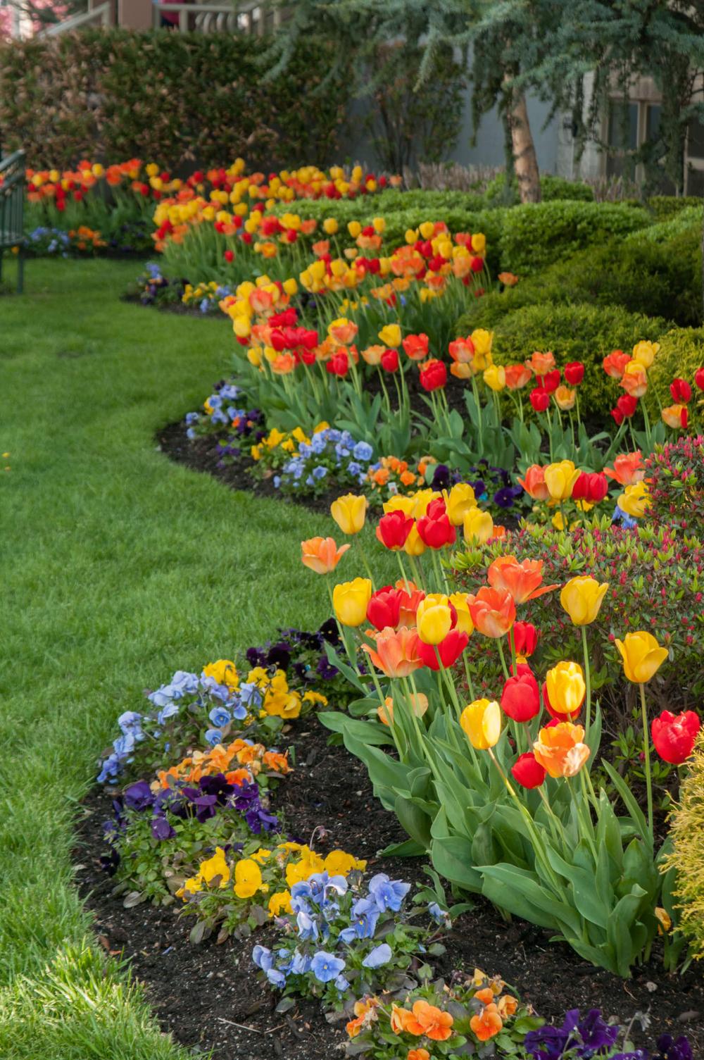 Colorblends Tulips In The Landscape Bulbs Garden Design Garden Bulbs Beautiful Flowers Garden