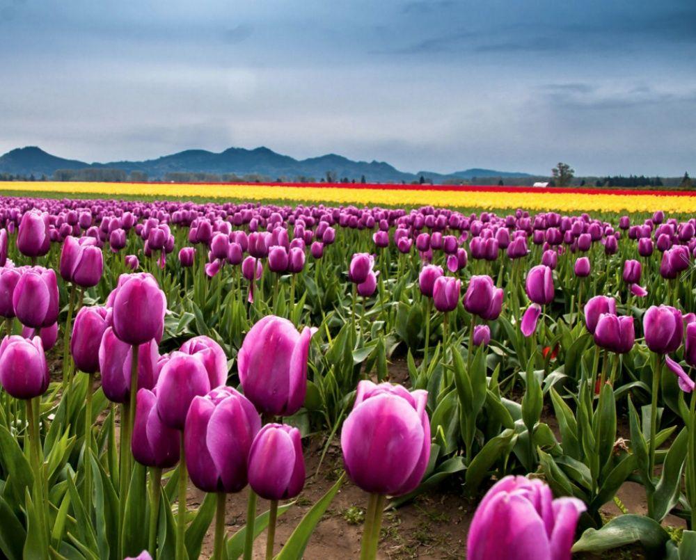 15 părți ale lumii în care primăvara este deosebit de frumoasă