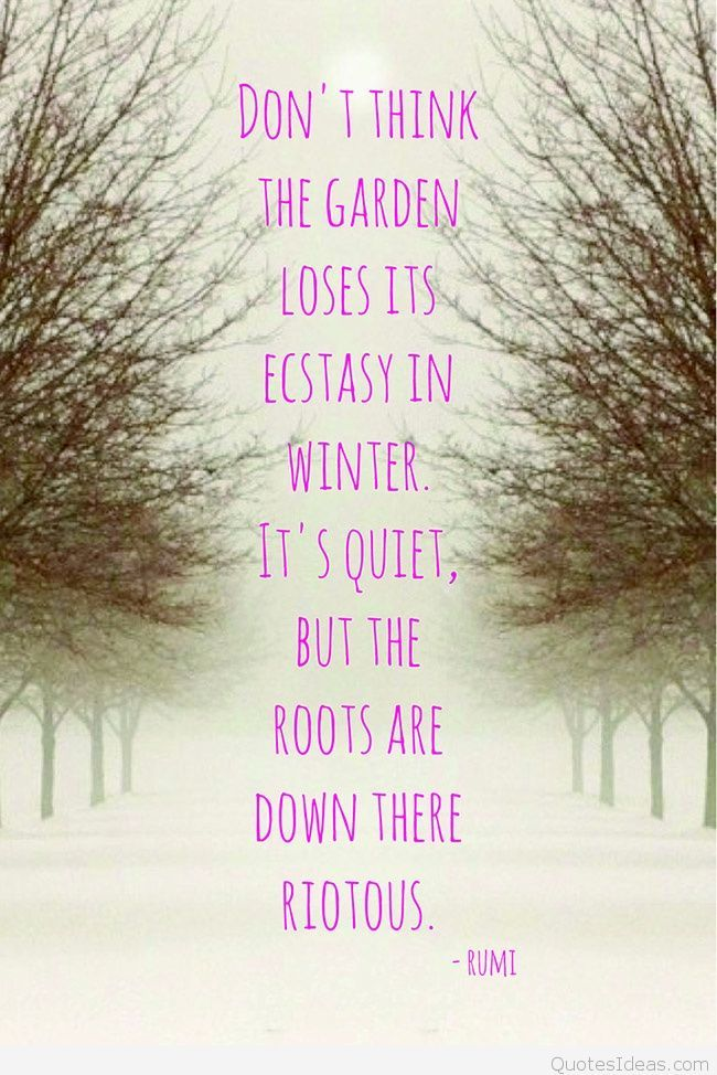 Rumi quote | so you say | Garden quotes, Winter solstice quotes