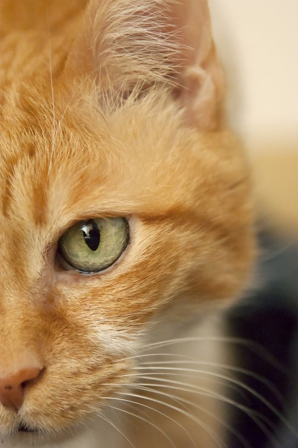 This Reminds Me Of My Mulligan I Miss Him So Much Yellow Cat Orange Tabby Cats Beautiful Cats