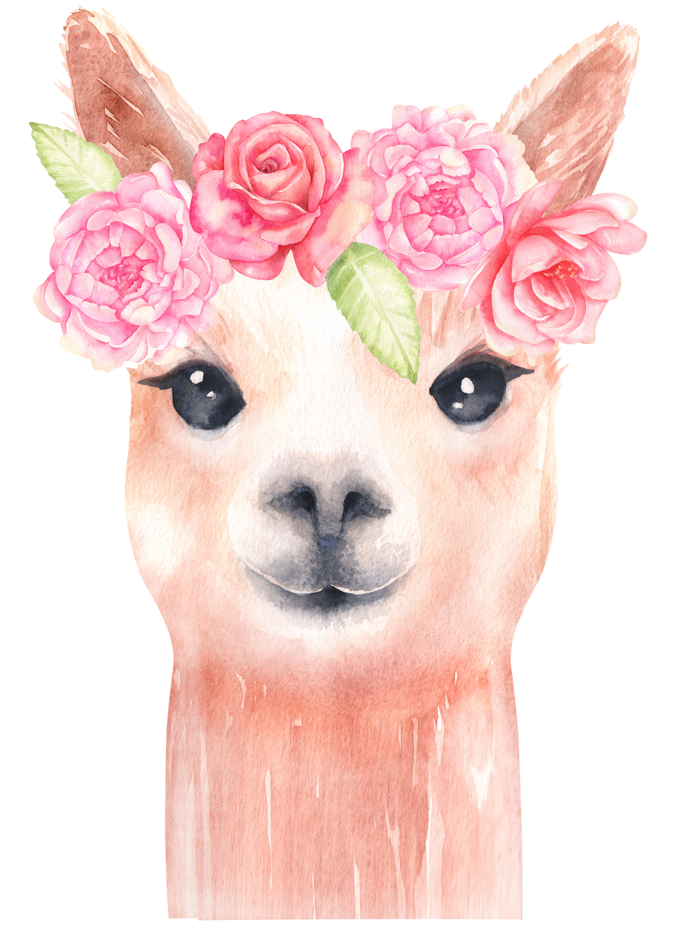 small resolution of alpaca and flower clipart llama clip art watercolor clipart floral clipart baby