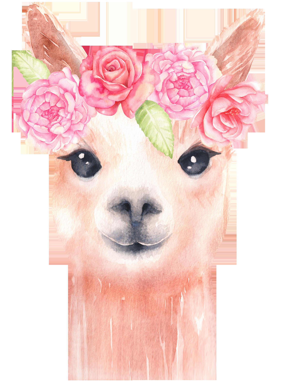 alpaca and flower clipart llama clip art watercolor clipart floral clipart baby [ 2210 x 3000 Pixel ]