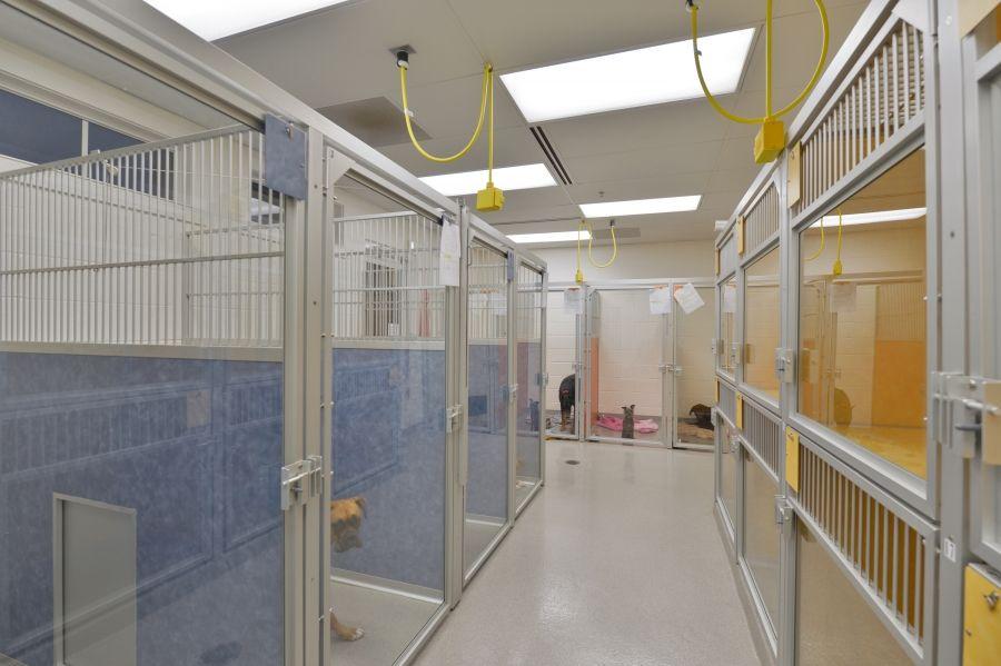 Dog Boarding Hospital Design Animal Hospital Small Animal Hospital
