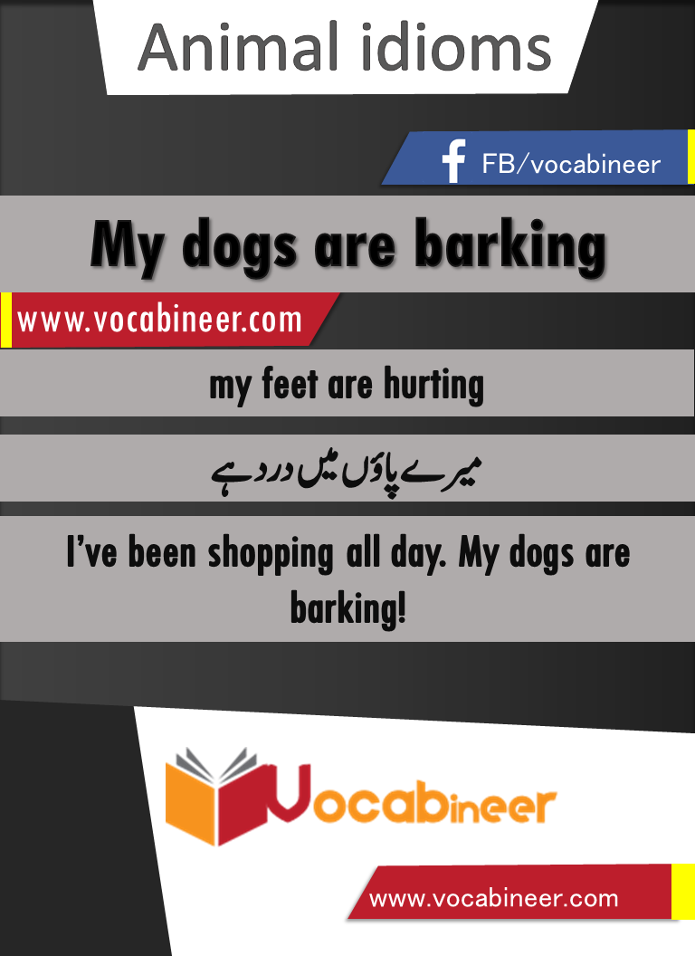 My dogs are barking Idiom with Hindi and Urdu meanings and