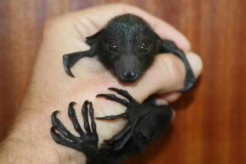 So cute, this little bat! ~ETS