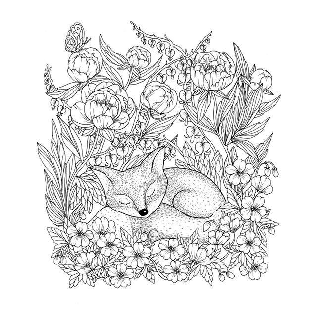 Https Mkczimg1 Asmirasro Netdna Ssl Com Cya5nmgtiovi S720x720 Jpg Fox Coloring Page Animal Coloring Pages Coloring Pages