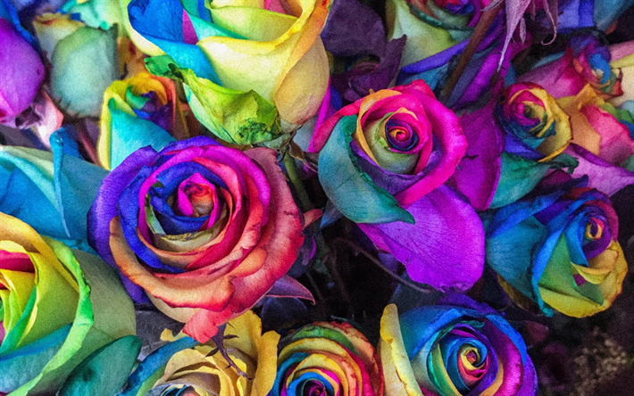 Download Wallpapers Colorful Roses Buds Bouquet Close Up