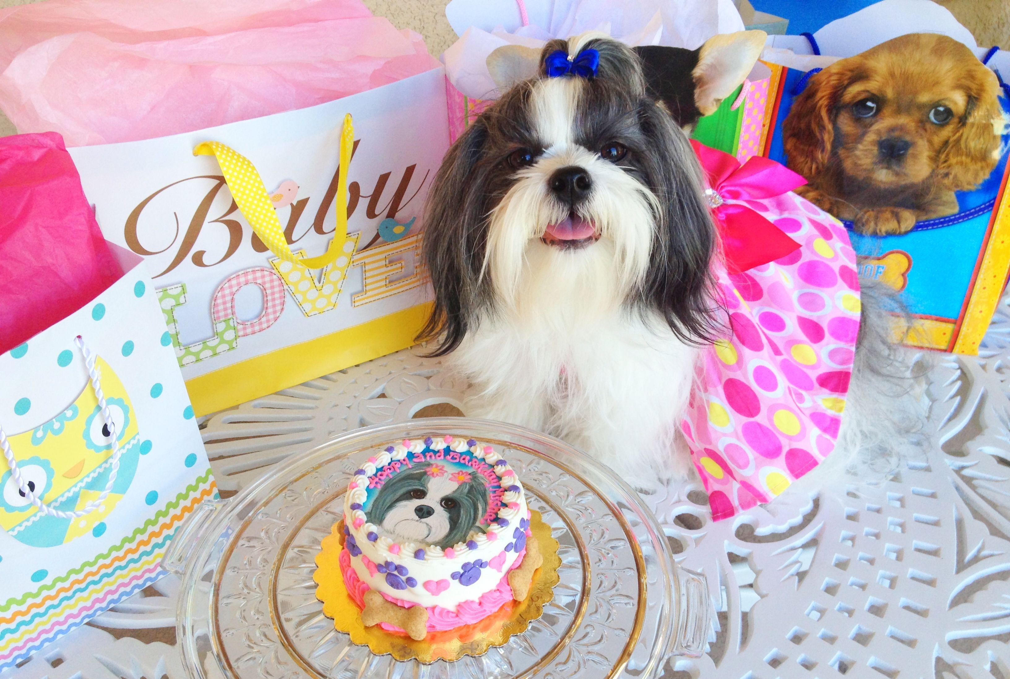 Dog birthday party i love dogs dog birthday dog
