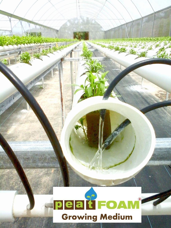 PEATFOAM GrowingMedium NFT Coriander Plant Greenhouse