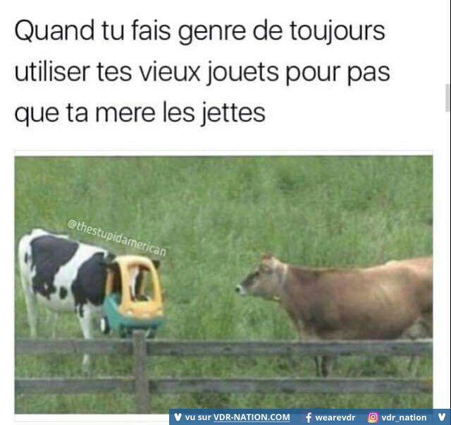 Vdr humour d pinterest dr le humour et rire - Photo de vache drole ...