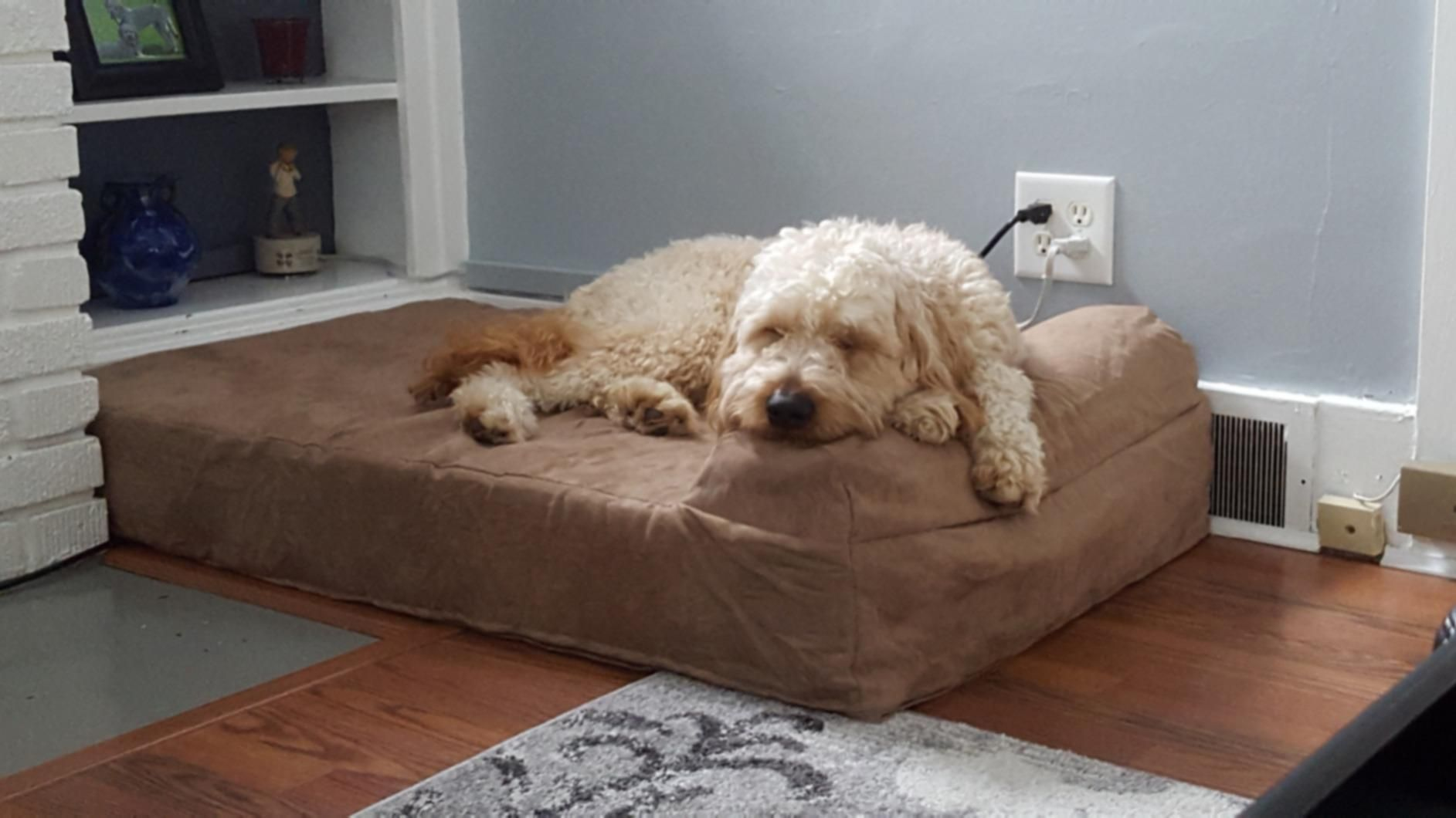 Big Barker Will Only Ever Make Beds In America Using American Made Foam Our Reputation Is Our Most Important Asset We O Cool Dog Beds How To Make Bed Dog Bed