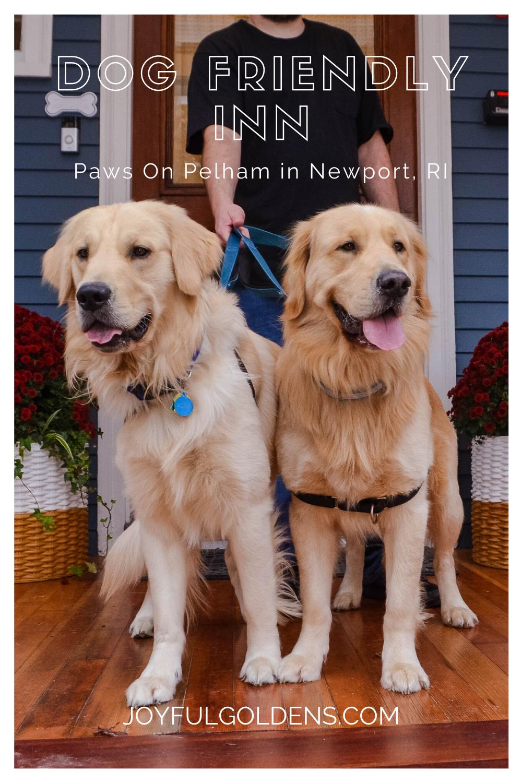 Dog Friendly Inn Paws On Pelham In Newport Ri In 2020 Dog Friends Dog Friendly Hotels Happy Dogs
