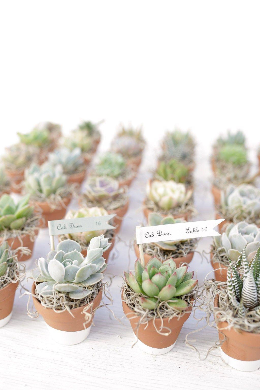 mini Cactus Party gift- Cactus arrangements Bridal shower favors Wedding favors 100 Wedding collection Cactus in  2 Pots