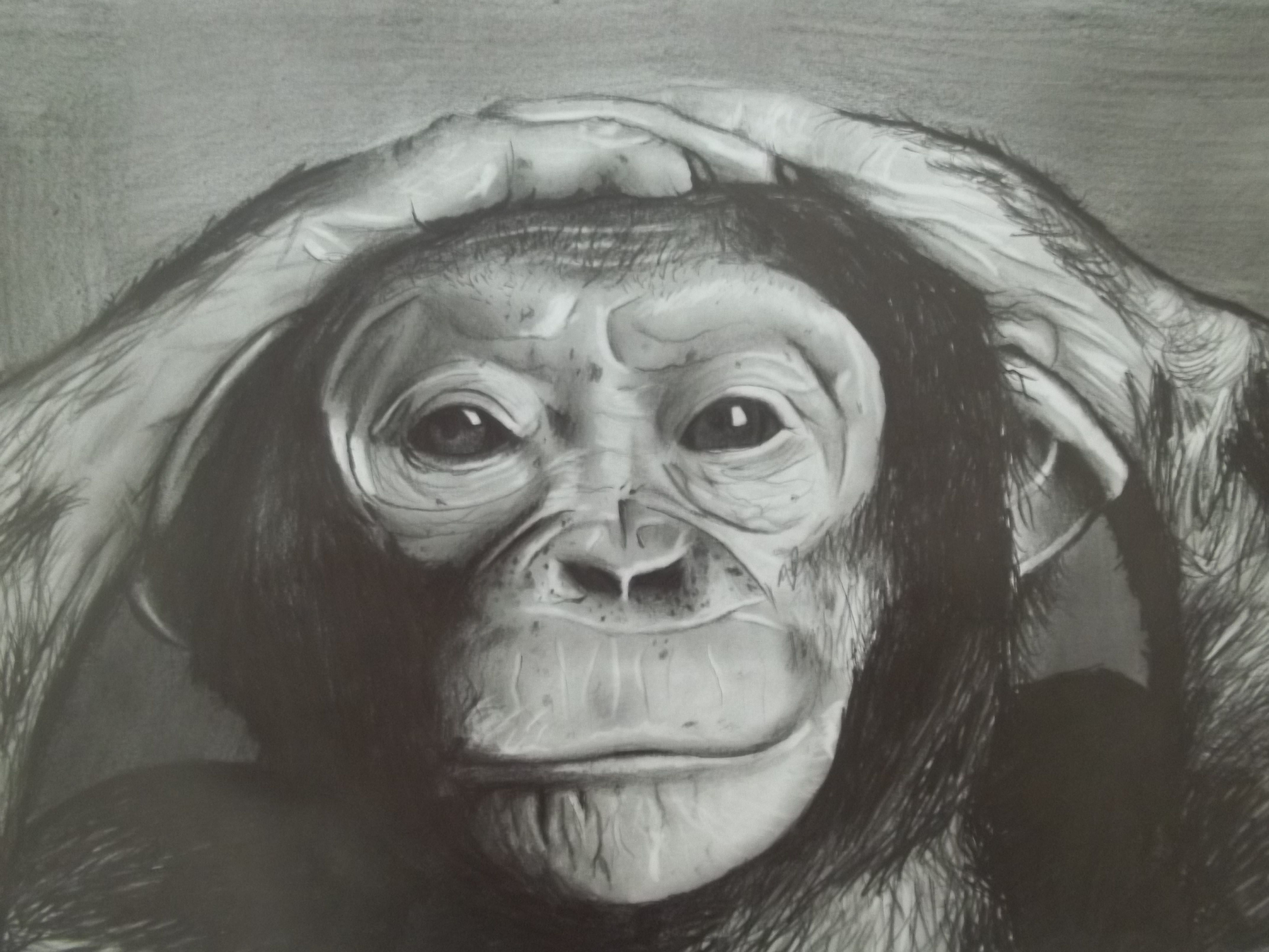 Monkey pencil drawing