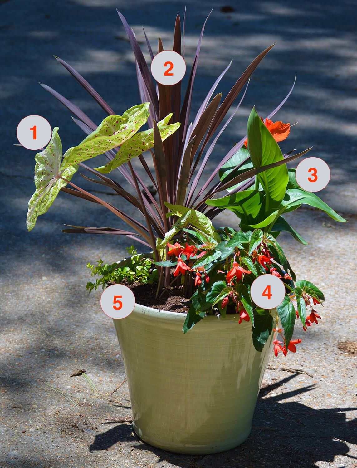 Tropical Plants for Summer Color is part of Container garden Arrangements - Red, orange, yellow, and lime green imbue the feeling of the tropics  and in a container garden inspired by the plants and colors of the region  we can bring the tropics to our homes