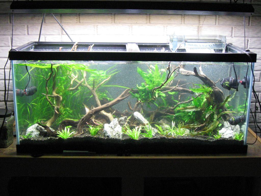 200 Gallon Fish Tank
