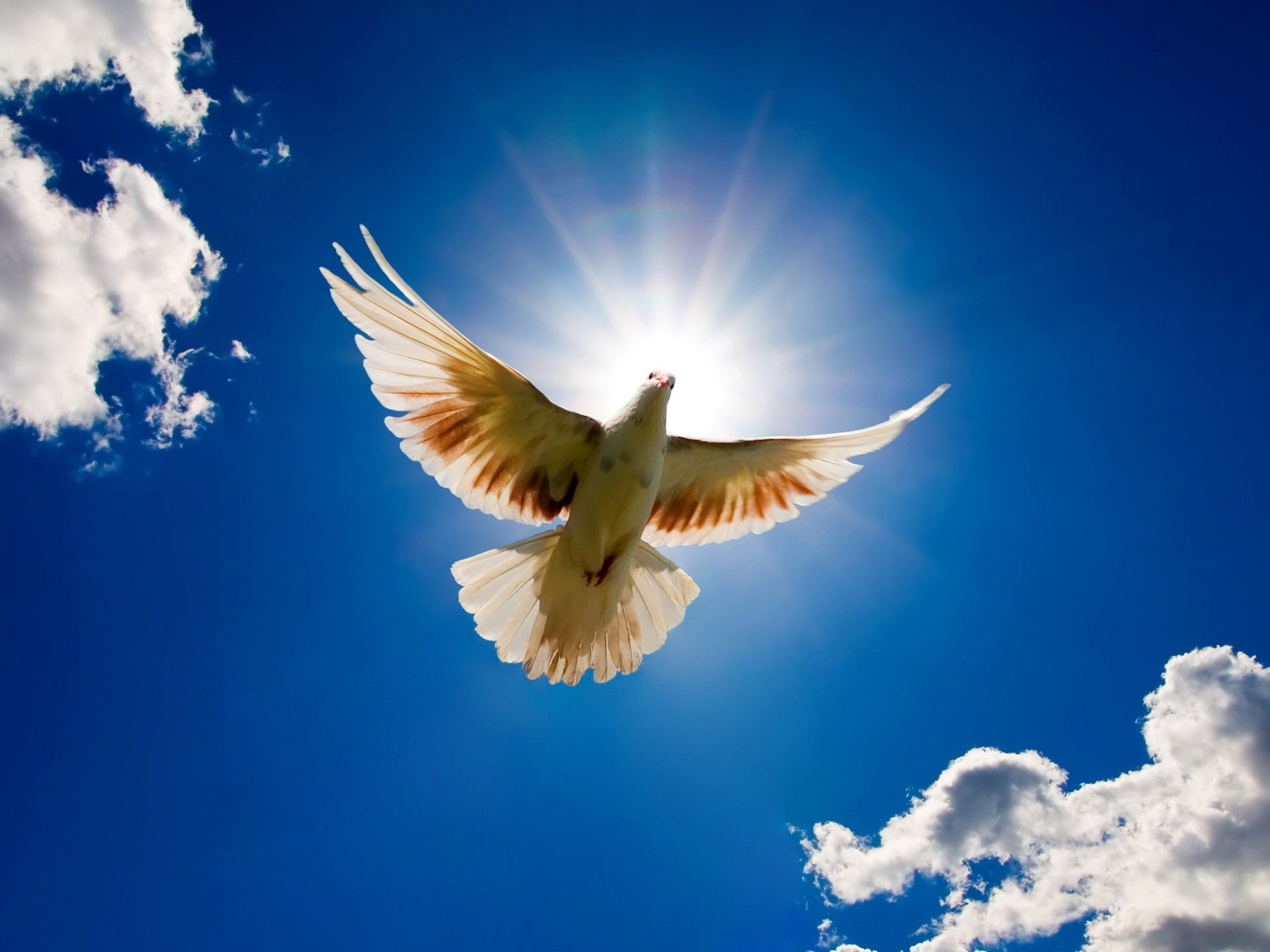 pictures of the sun in the sky dove bird from the sky when it