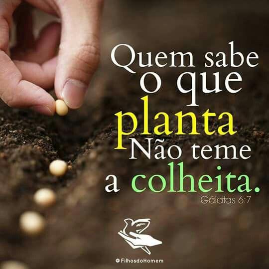 Vamos Plantar Coisas Boas Coisas ótimas Maravilhosas