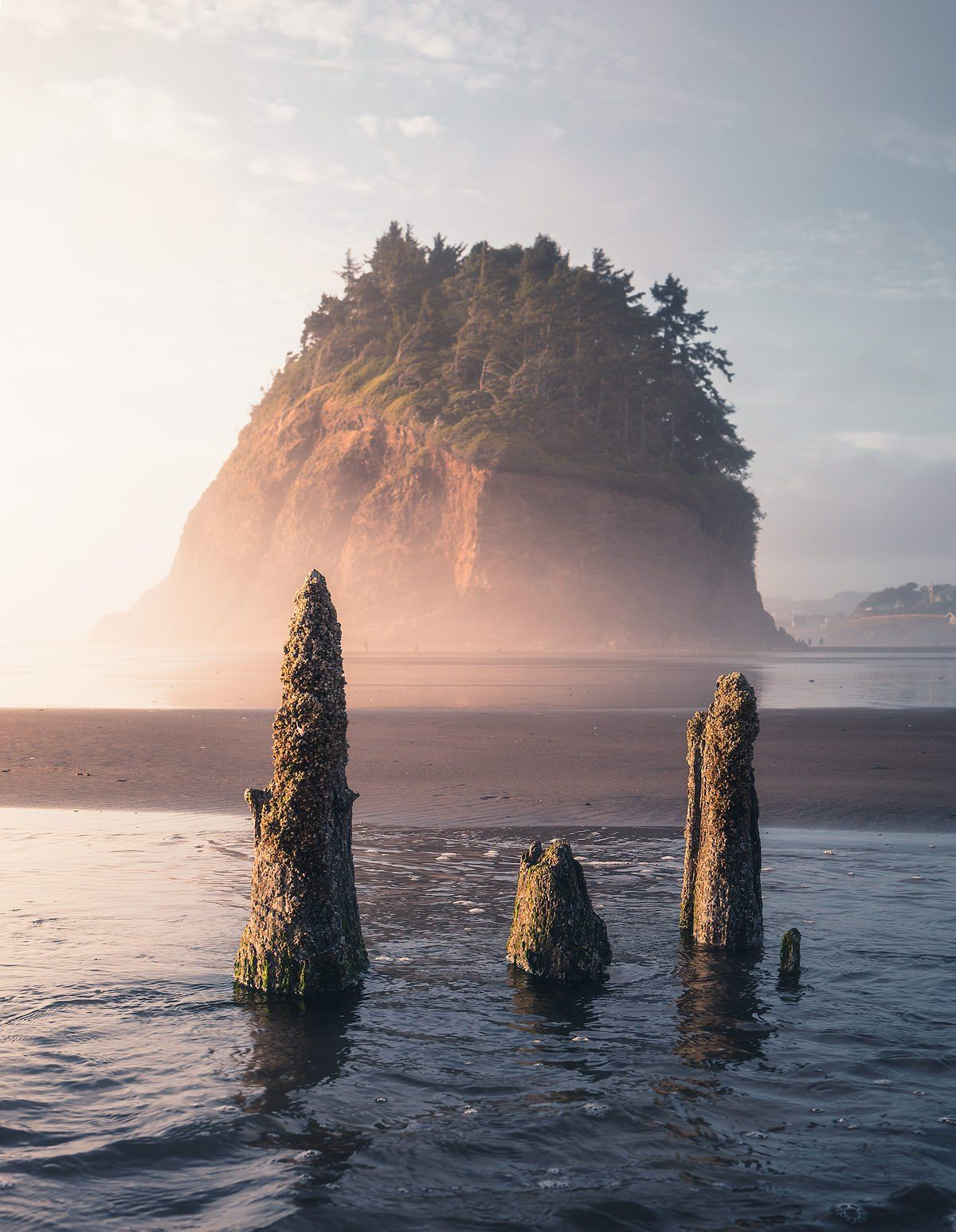 The Neskowin Ghost Forest in Oregon, where ancient