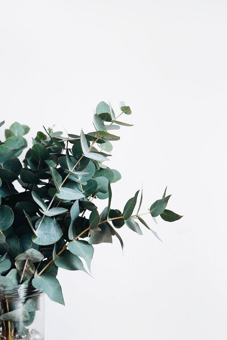 pin ↠ @ashxleyg | Plant aesthetic, Plants