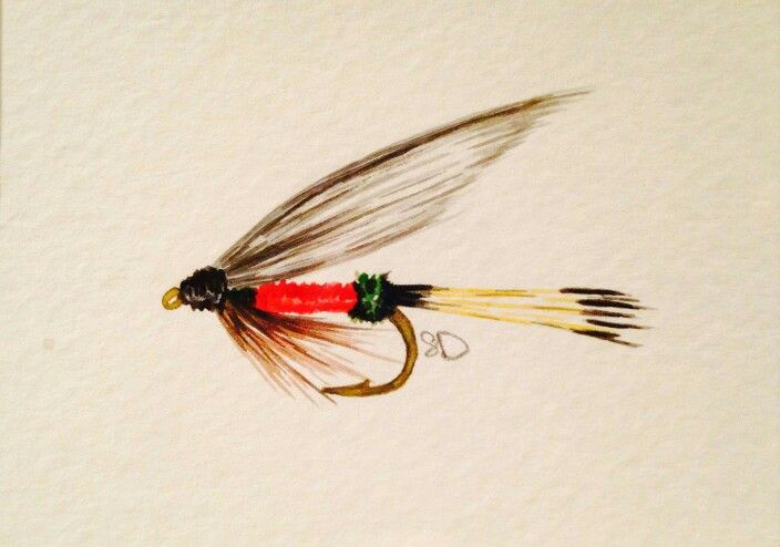 Royal Coachman Fly Painted In Watercolor See More At Www Hcffc