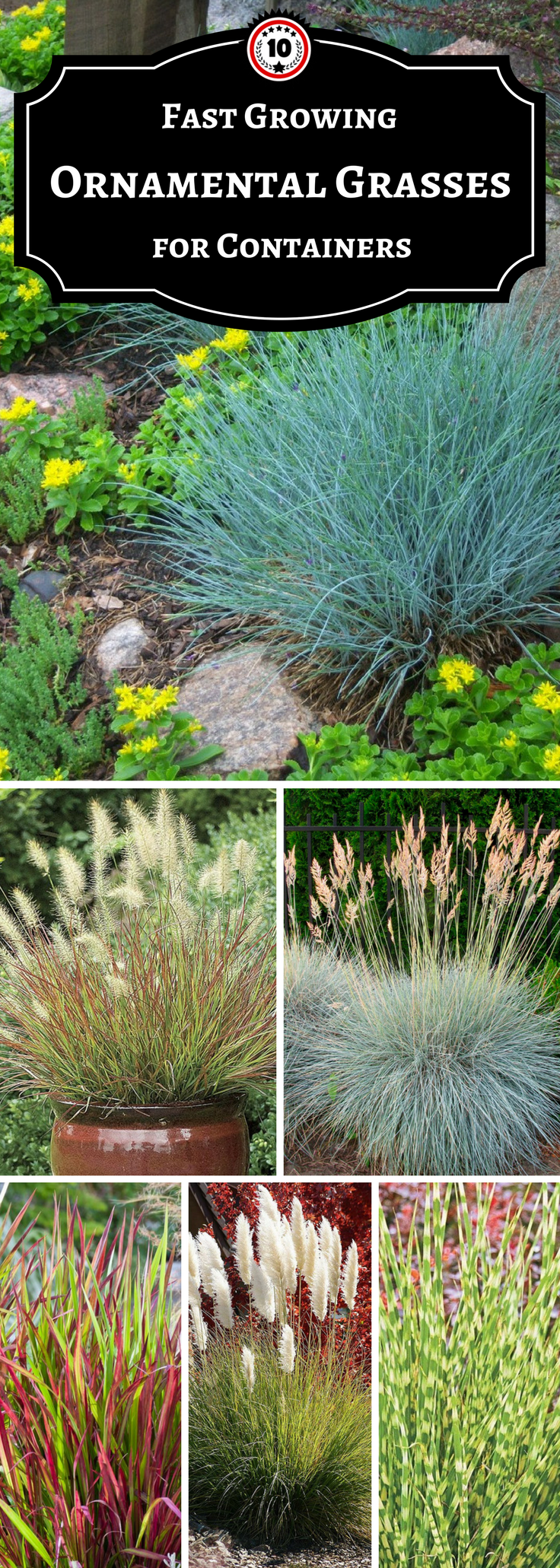 Ornamental Grasses In Containers Top 10 ornamental grasses for containers grasses gardens and plants one of the best ways you can decorate any container in your garden is by adding a ornamental grass in it this kind of grass will be a fascinating display workwithnaturefo