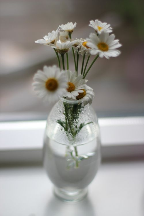Flowers Crazy For Daisies Pinterest Flowers Flower And
