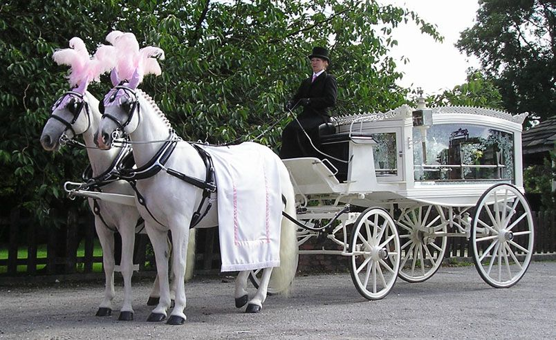 Horse drawn hearse, horse drawn funeral | Hearse, Horses, Horse drawn