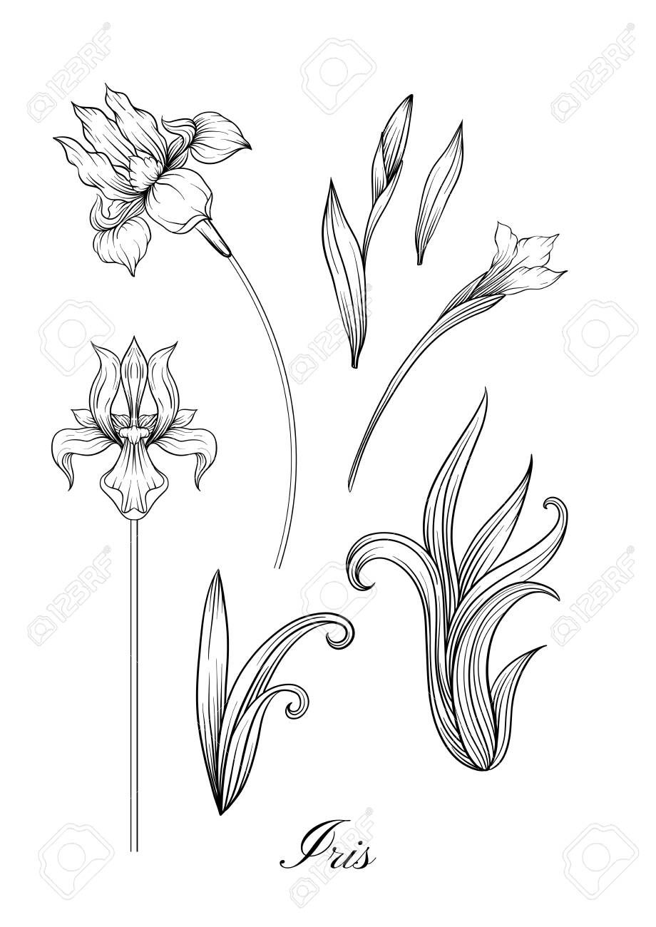 Iris Flower Fleur De Lis Flower De Luce Flag Element For Design Outline Hand Drawing Vector Illustration In Art Nouveau Drawings Flower Illustration Art
