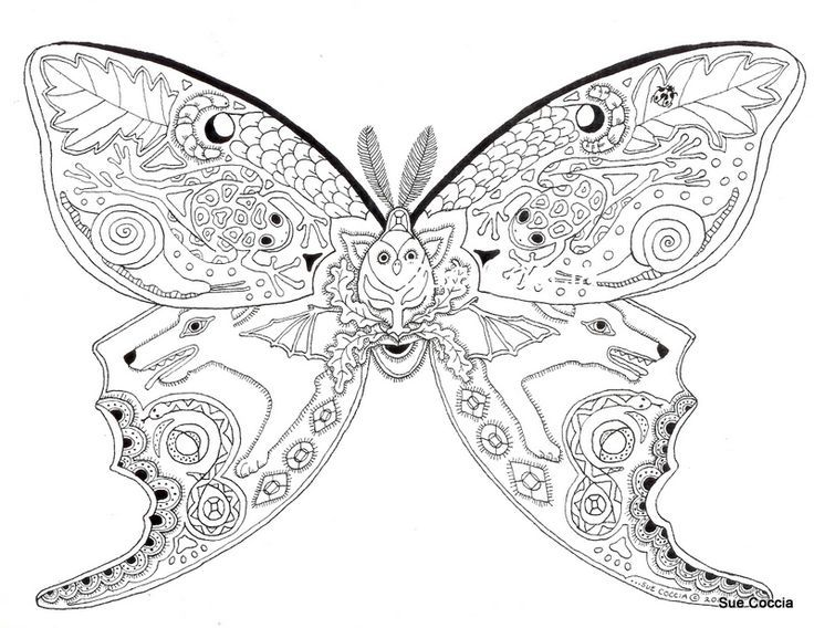 Luna Moth Coloring Page For Adults With Images Animal Coloring
