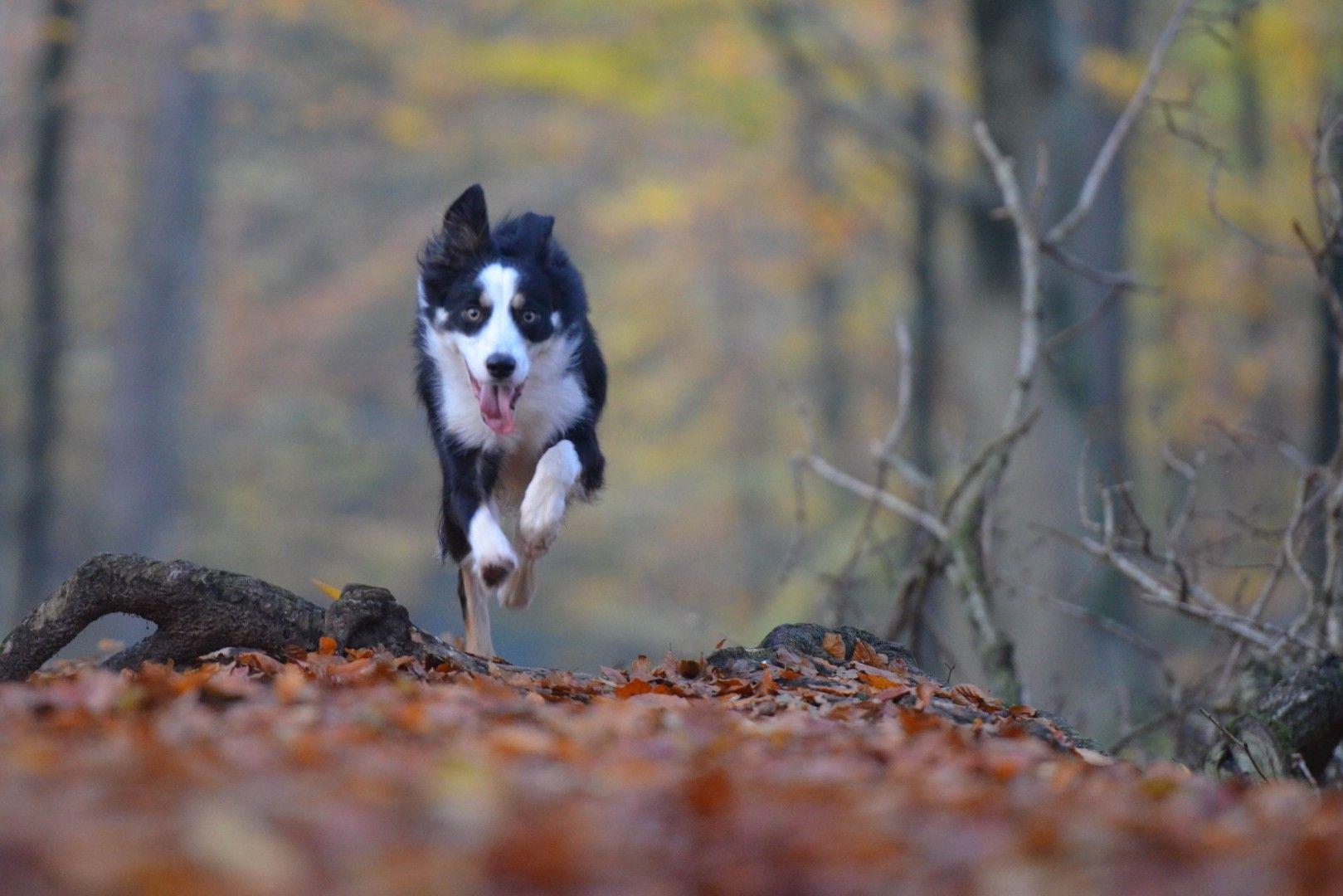 Hund Entlaufen In Baden Wurttemberg Die Info Seiten Fur Vermisste Hundehund Entlaufen In Baden Wurttemberg D Hunde Alter Hund Urlaub Mit Hund