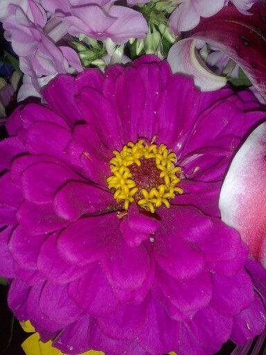 Fresh flowers from a garden