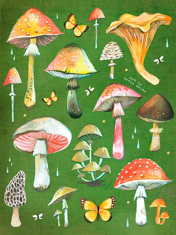Wheatpaste 'Mushroom Chart' by Katie Daisy Graphic Art on Canvas | Wayfair