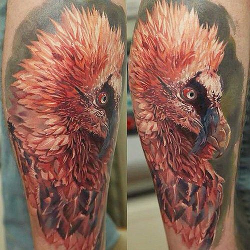 Bearded Vulture Tattoo Colorful Bird Tattoos Realistic Bird Tattoo Birds Tattoo