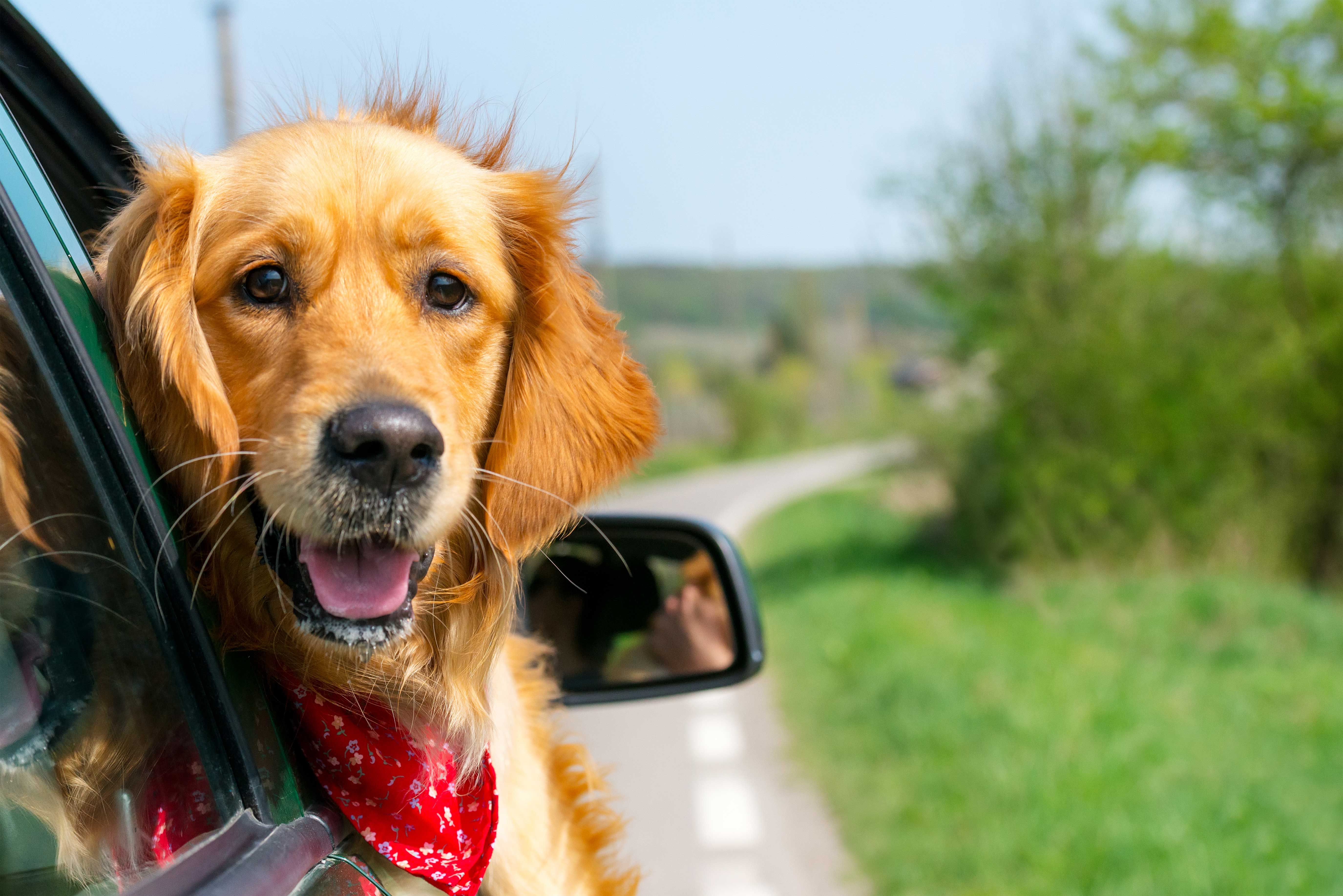 For Your Convenience Morris Animal Inn Offers A Pet Chauffeur Service Round Trip To Morris Animal Inn Dog Daycare Pet Boarding Natural Dog Care