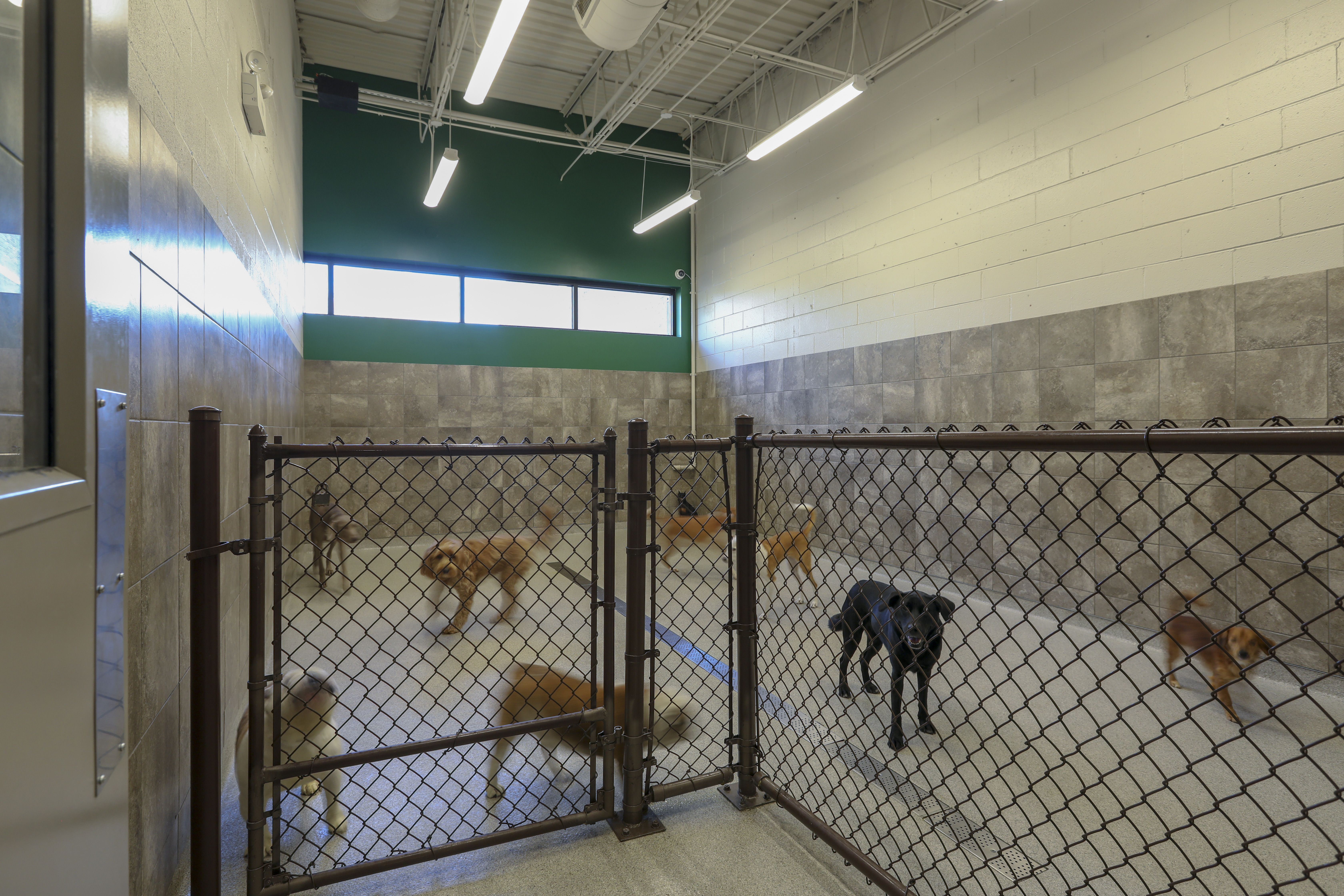 Animal Hospital Indoor Play Area, Animal Hospital Doggie