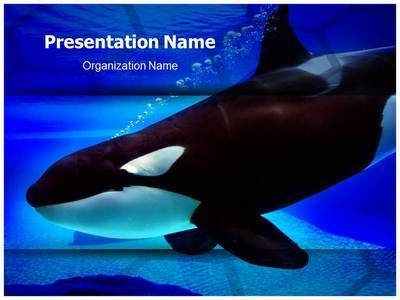 Killer whale powerpoint template is one of the best powerpoint killer whale powerpoint template is one of the best powerpoint templates by editabletemplates toneelgroepblik Images