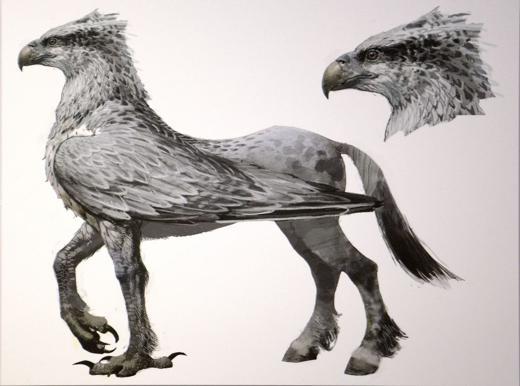 Hippogriff hippogryph a mix of an eagle the osprey or for The griffin