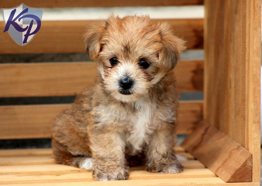 Adopt Yoda 2 On Petfinder Adoption Old Dogs Terrier Mix