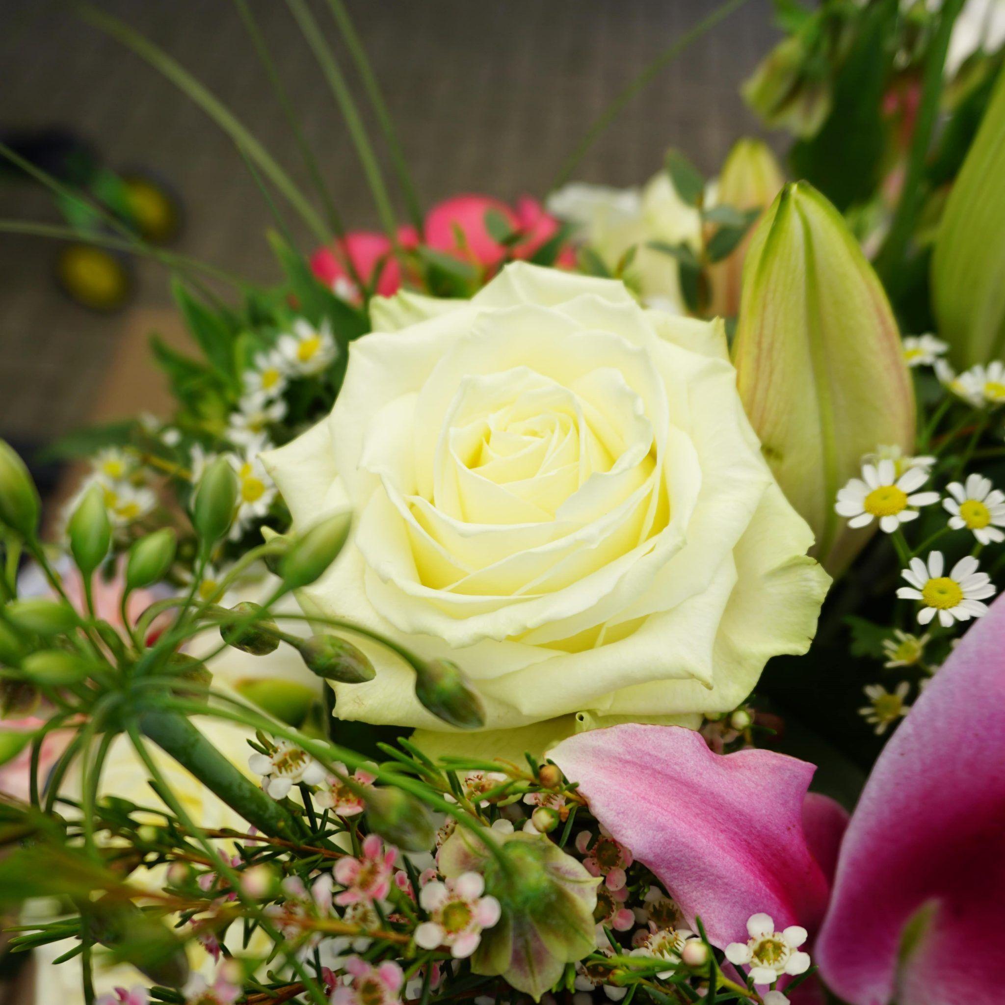Weiße Rosen - Treue und Bewunderung | Weiße rosen