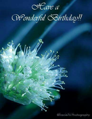 Pin By Trivedi Parul On Best Wishes Birthday Wishes Birthday Roses Facebook Birthday