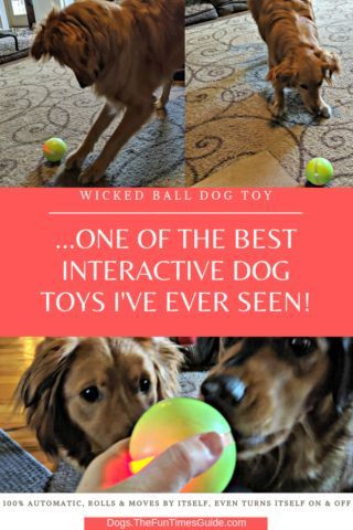 Interactive Dog Toys Exercise The Wicked Ball Dog Toy Is One Of The Best Interactive Dog Toys To Prevent Dog Boredom - It's 100% Automatic, Rolls & Moves By Itself, Even Turns Itself ON & OFF! | The Dog Guide