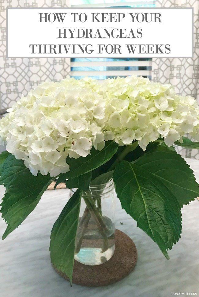 How To Keep Hydrangeas Alive