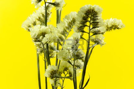 plant flower bloom blossom flora dry flowers yellow background Stock Photo